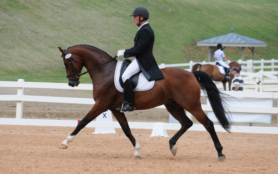 From Bargain Barn to Blue Ribbons ~ The Chronicle of the Horse