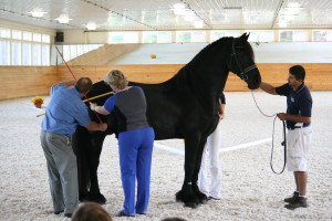 "Conformation, Movement, and the ""Fourth Gait"" ~ USDF Connection"